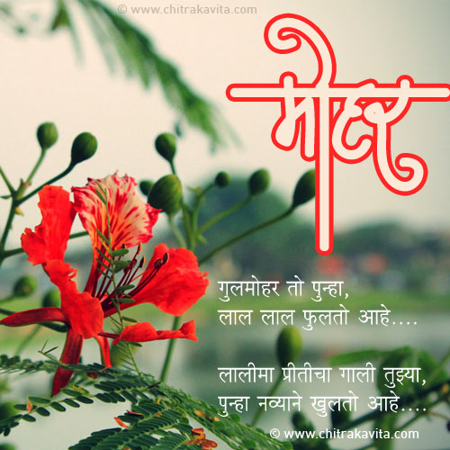 Gulmohar Marathi Love Greeting Card